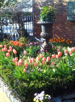 You know it's spring when the tulips are this gorgeous!